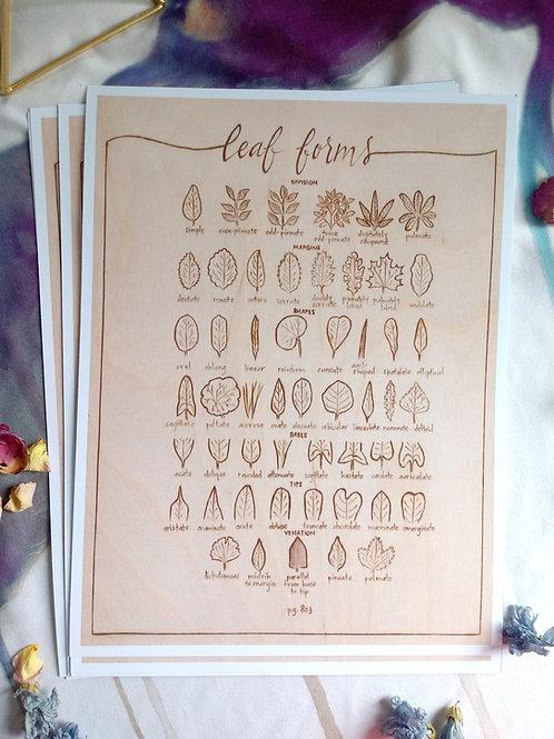 Art Print - Signed Series - Botanical Study of Leaf Forms - Wood burned Print