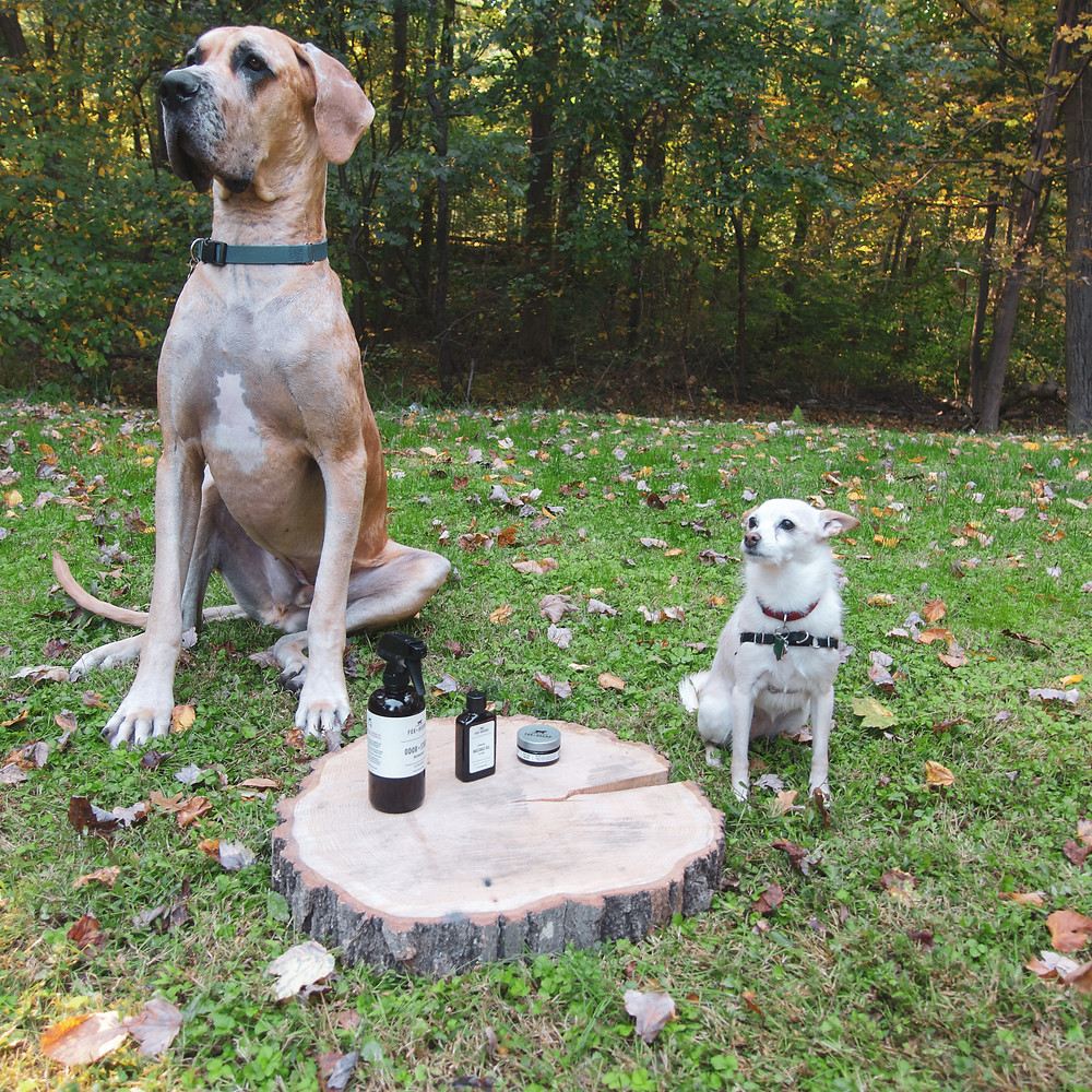 Two dogs sitting beside Fox+Hound dog products.