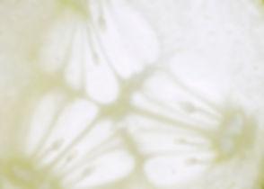 concombre (élixir savon)#01.jpg