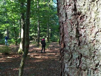 Waldachtsamkeit-Einzeltraining-München.jp