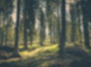 adventure-atmosphere-conifer-418831.jpg