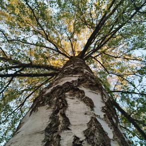 Waldachtsamkeit - ein Naturerlebnis für alle Sinne