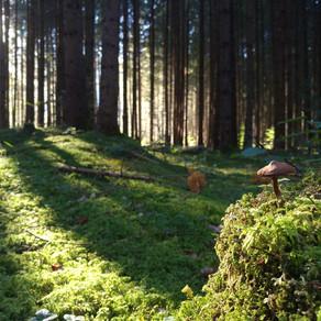 Waldbaden und Waldachtsamkeit - eine Definition