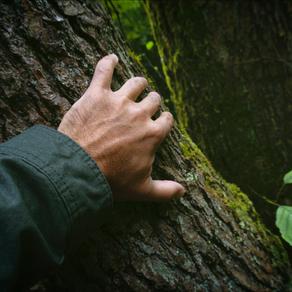Übungsbeispiel - Blindes Fühlen -Waldachtsamkeit