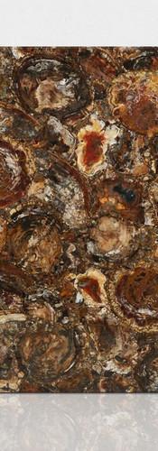 petrified wood brown 4.jpg