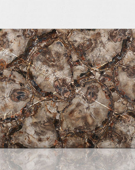 petrified-wood-brown-classic11.jpg