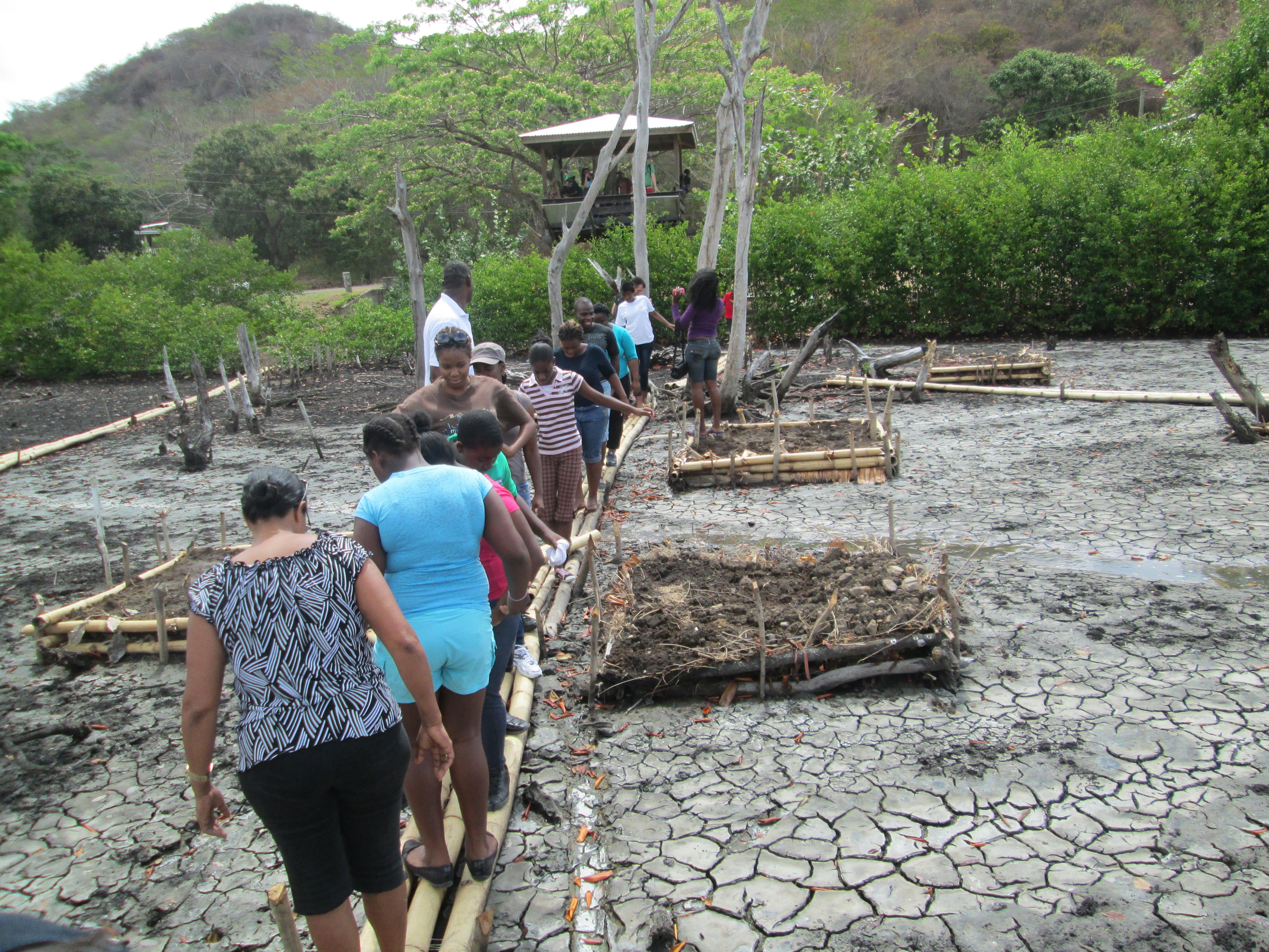 Volunteers entering mangrove system