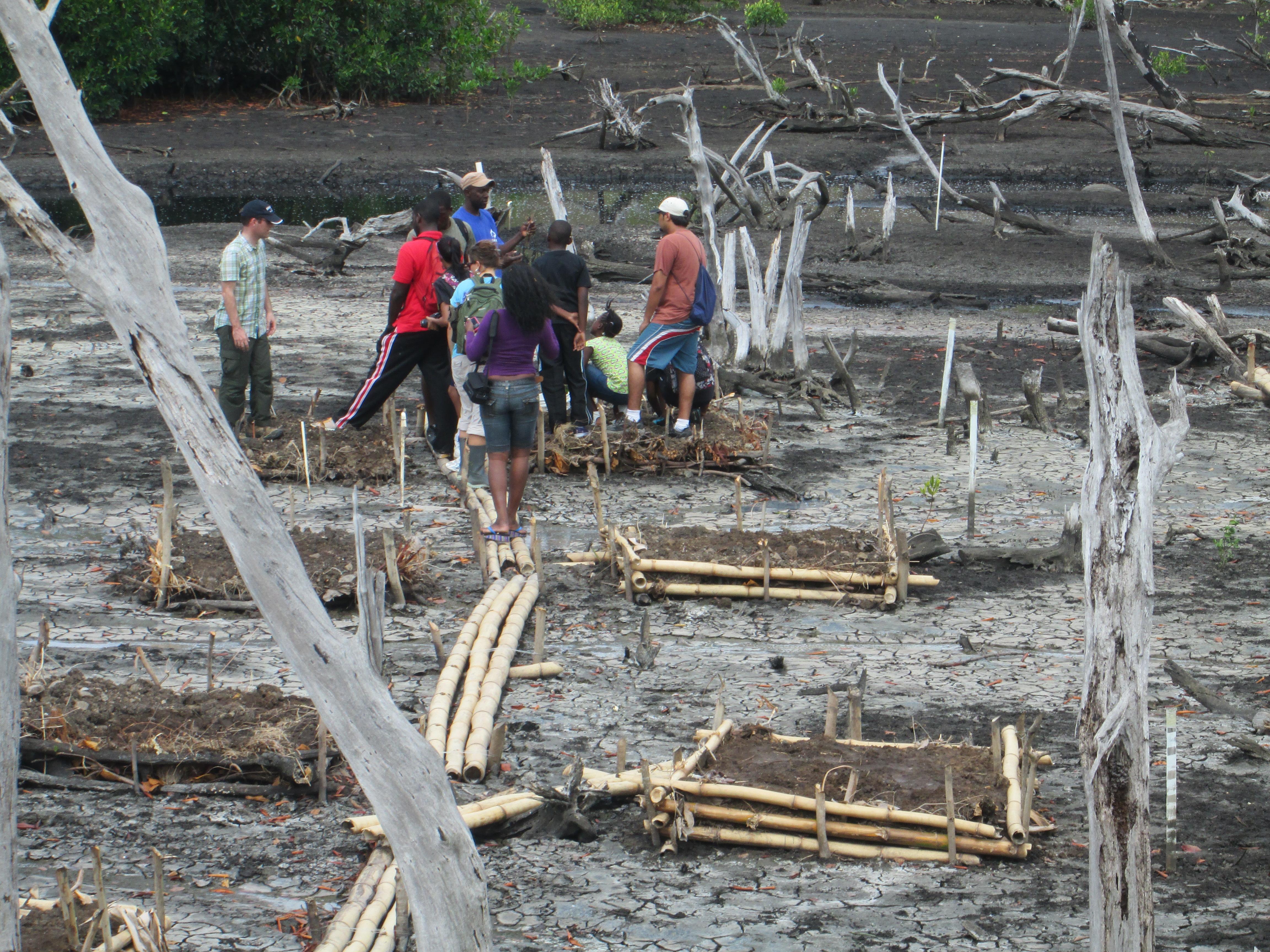 Volunteers preparing to plant
