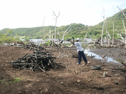 Cleaning mangrove system