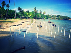 Mangrove transects