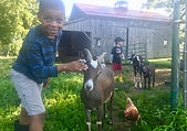 Nature's Farm Camp at Angelic Organics Learning Center