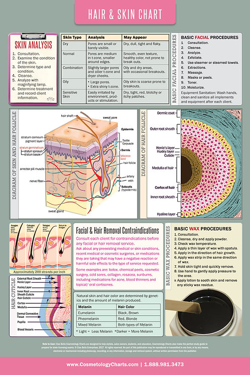 "Skin Care Anatomical High Gloss Laminated Poster 18"" X 27"" Inch-Color"