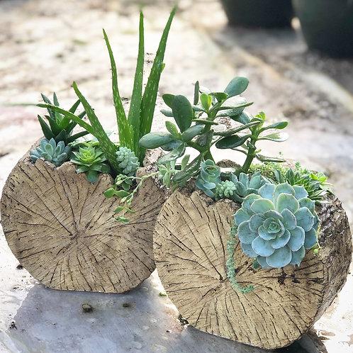 Succulent Tree Planter