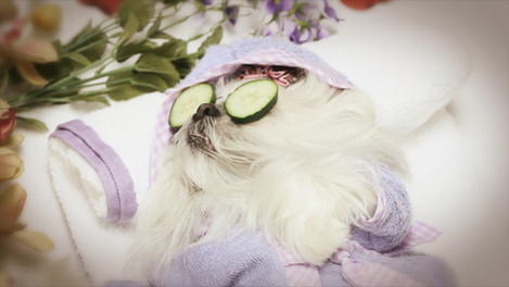 Designer Dog Salon - Commercial