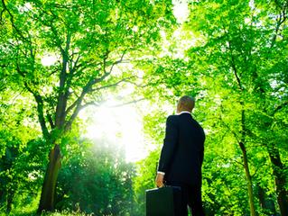 A importância da consultoria ambiental