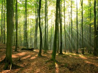 Softwares ajudam a monitorar a saúde das árvores nas cidades