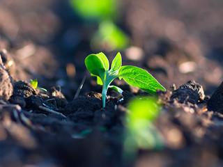10 práticas sustentáveis na agricultura para preservação e conservação do solo e do meio ambiente