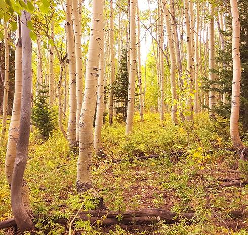 Aspen-Grove_edited.jpg