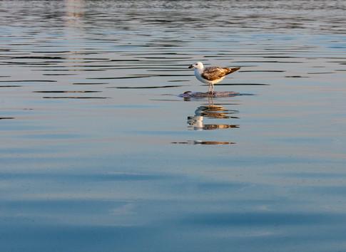 seagull on dead fish