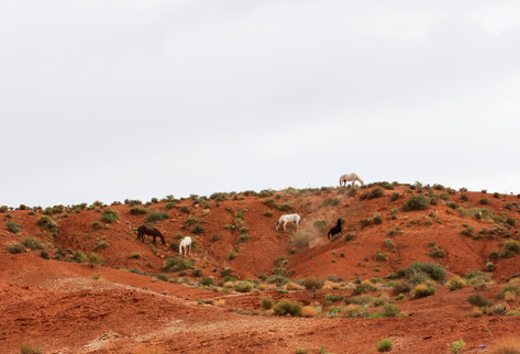 Horses at Monument Valley