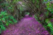 beautiful path.jpg