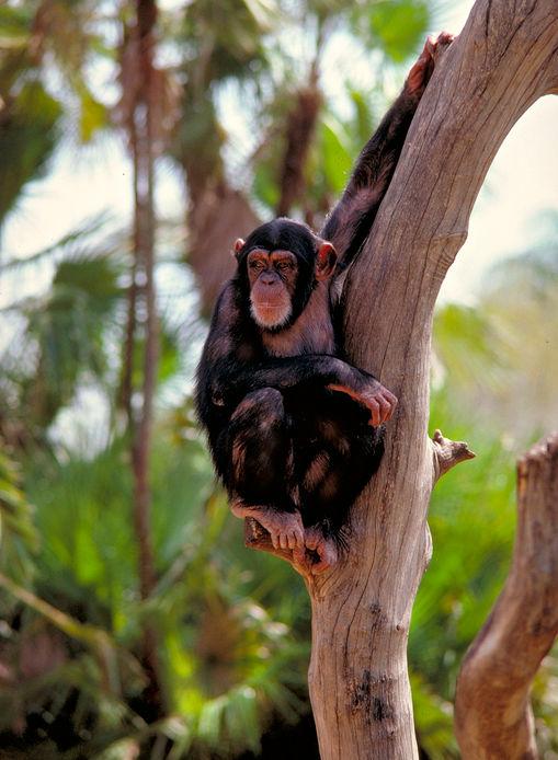 Monkey in Tree.jpg