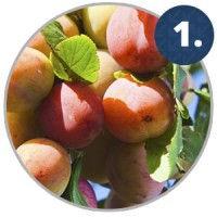 ripening-fact-1.jpg