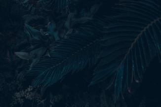 BackgroundSiteWeb.jpg
