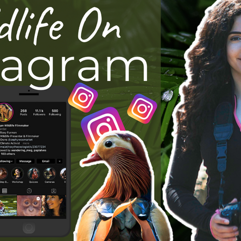 How to Edit Wildlife Photos for Instagram