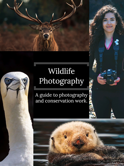 Wildlife Photography Ebook