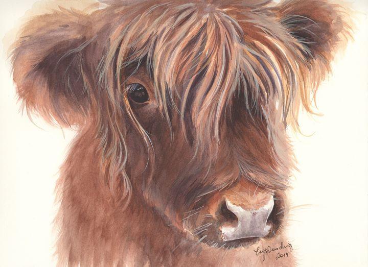 Morag - Highland Cow