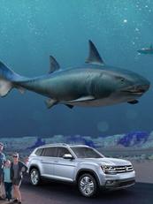Shark Week - Land of Sharks
