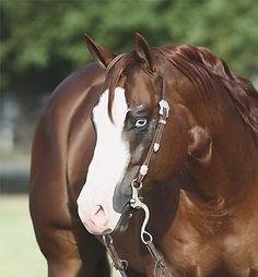 stallion-QHNSR-172-Gunners_Special_Nite-