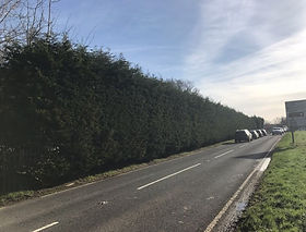York Tree Services - Hedge Trimming and Reduction