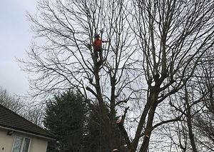 York Tree Services - Tree Surgery