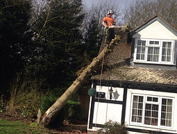 York Tree Services - Felling