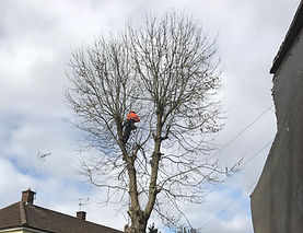 York Tree Services - Branch and Limb Removal