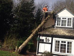 Yor Tree Services - Tree Surgery