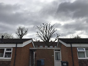 York Tree Services - Crown Reduction