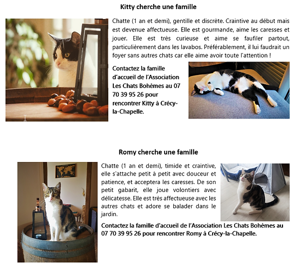 2021_09_14_14_34_07_Kitty_cherche_une_famille_Word.png