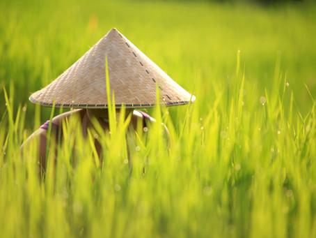 BALI - wie viel ist geblieben vom tropischen Traum?