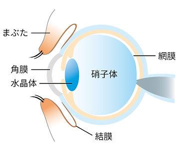紫外線の話_眼球.jpg