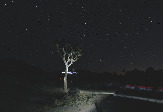 _light painting joshua treew.jpg