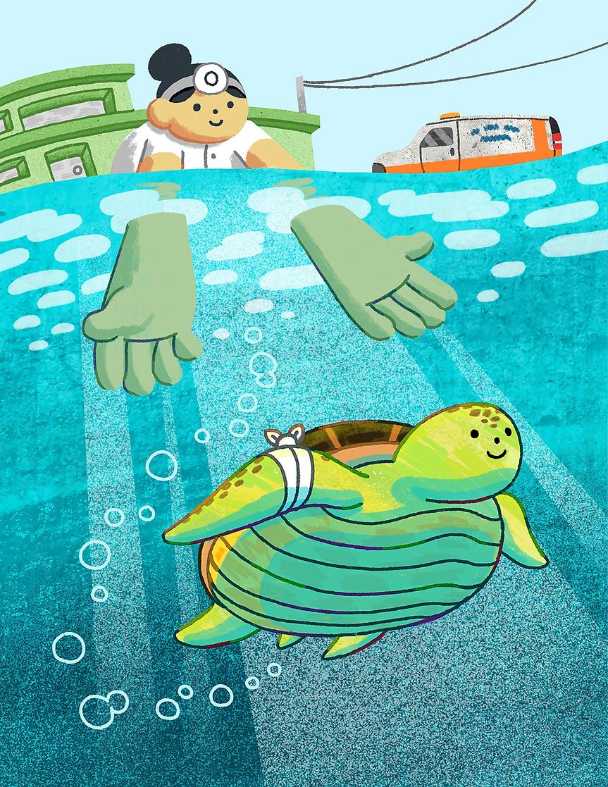 a.macdonald_Turtle-Hospital_FINAL copy-w