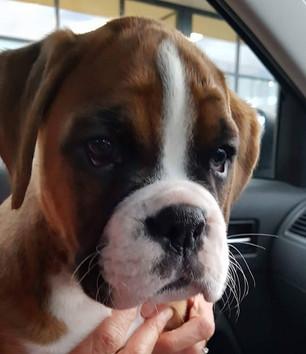 puppy-6.jpg