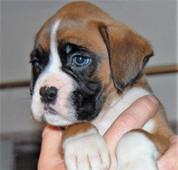 puppy-2.jpg