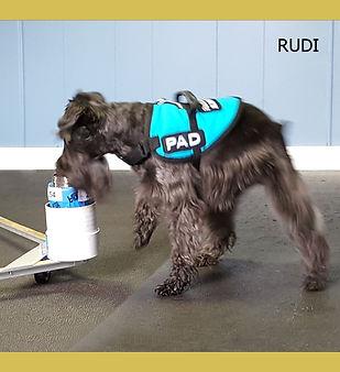 Rudi.jpg