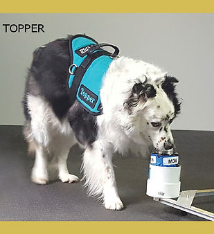 Topper.jpg