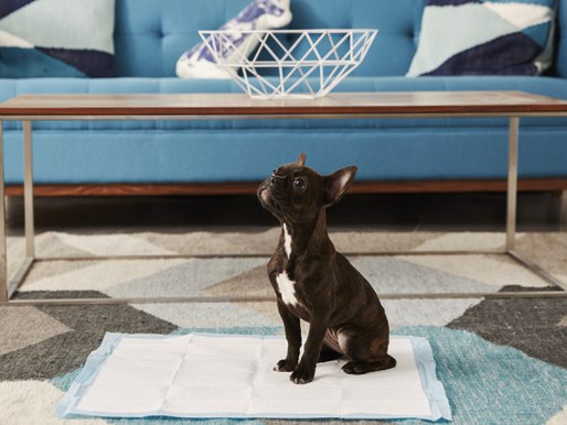 8 Tips for House-Training a New Puppy You Haven't Tried Yet
