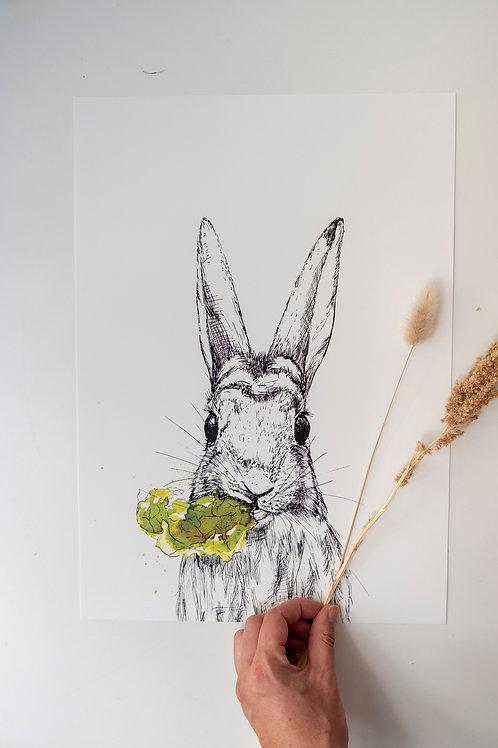 A3 konijn met sla